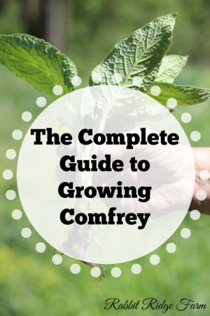 The Complete Guide to Growing Comfrey