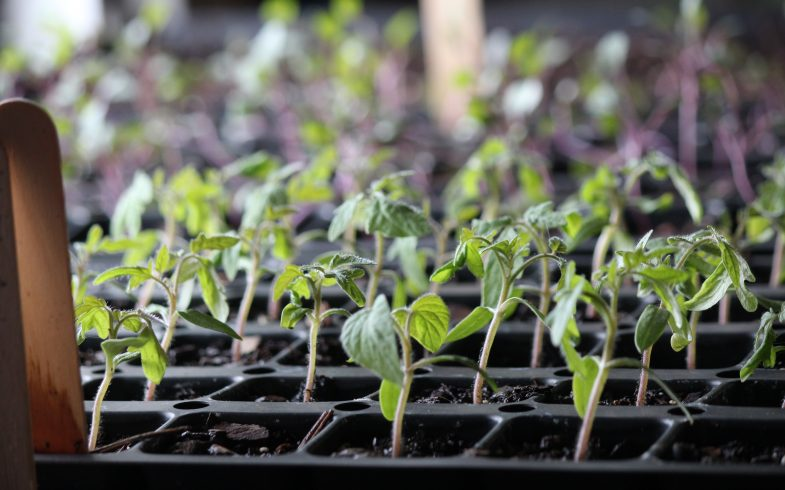 Springtime Hope: Tips for Growing Healthy Seedlings
