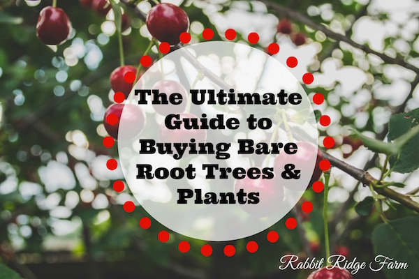 The Ultimate Guide to Buying Bare Root Trees and Plants