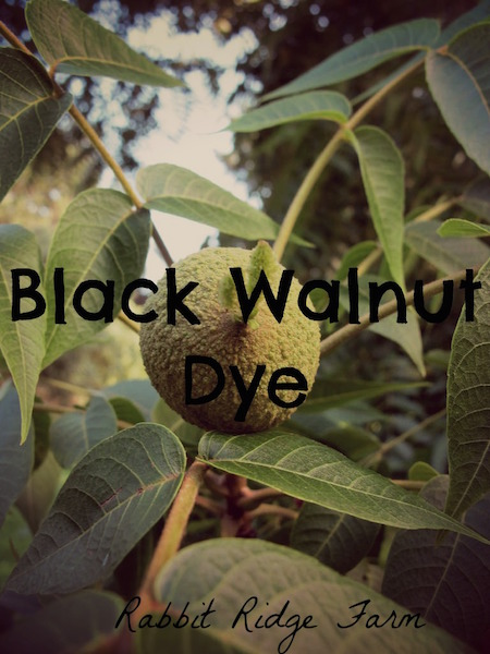 Black Walnut Dye