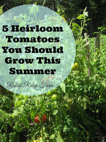 5 Heirloom Tomatoes You Should Grow This Summer
