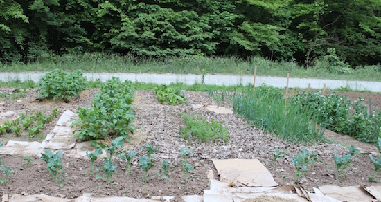 How We Made Our Large Garden Super Manageable
